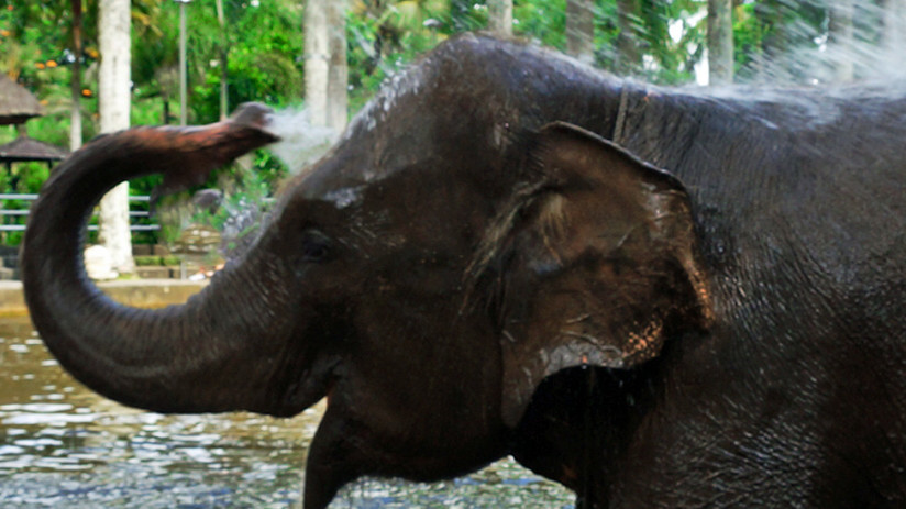 Bali Tour: for a magical experience with elephants, let Bali Tour Magic arrange a Bali tour or Taro Elephant Safari Park for you, expertly & at great value.