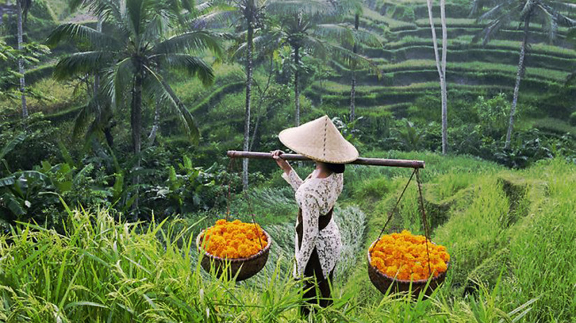Bali tour: Discover Ubud with Bali tour experts.  Let Bali Tour Magic show you the many delights of Ubud, with seamless Bali tour arrangements & great value