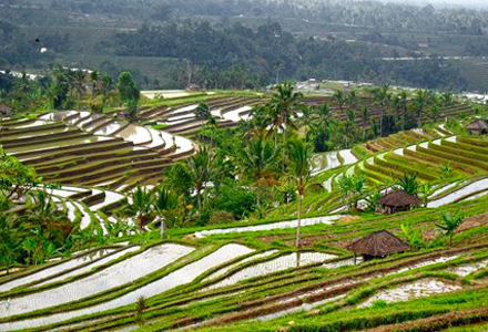 Lovina Tour: Explore north Bali on a full day Lovina tour