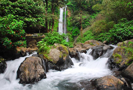 Lovina Tour: Exploregit git waterfall and north Bali on a full day Lovina tou