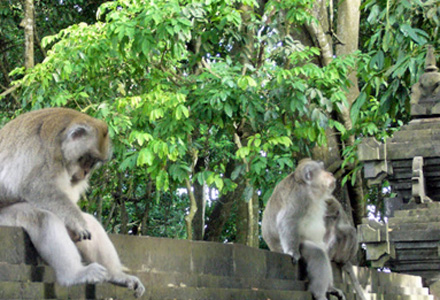 Tanah Lot Tour withmonkey forest Alas Kedaton enroute to tanah Lot.
