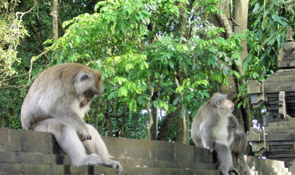 things to do in Bali - Alas Kedaton Monkey Forest, West Bali