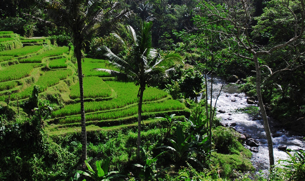 things to do in Bali - Ayung River near Pelaga