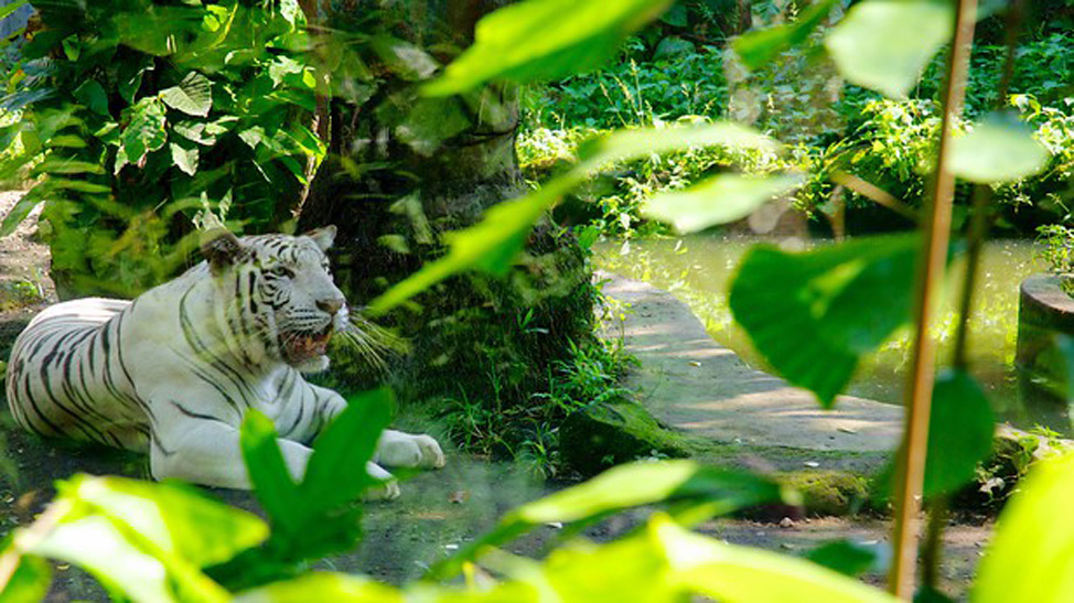things to do in Bali - Bali Zoo offers a great wildlife experience near Kuta and a range of fun tree-top adventures for the whole family.