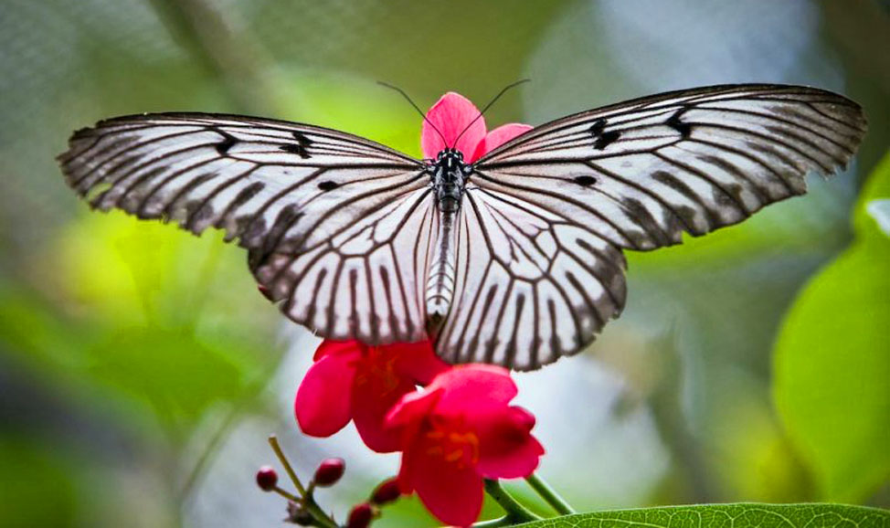 things to do in Bali - Bali Butterfly Park north Bali