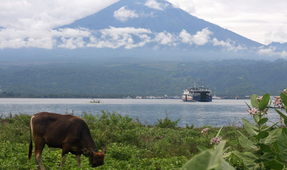 things to do in Bali - West Bali, Gilimanuk Bay, Bali's westernmost city and where you cross to Java by ferry.