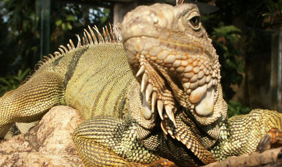 things to do in Bali - Jaya Reptile Park, West Bali