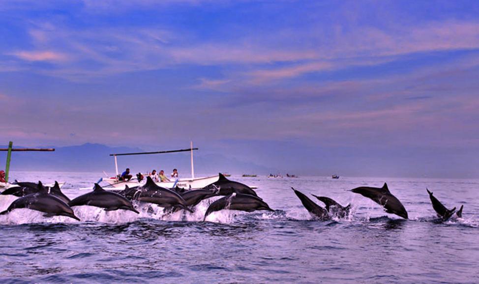 things to do in Bali - Lovina dolphin watching