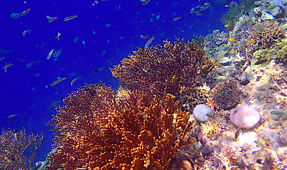 things to do in Bali - Mejangan Island snorkelling