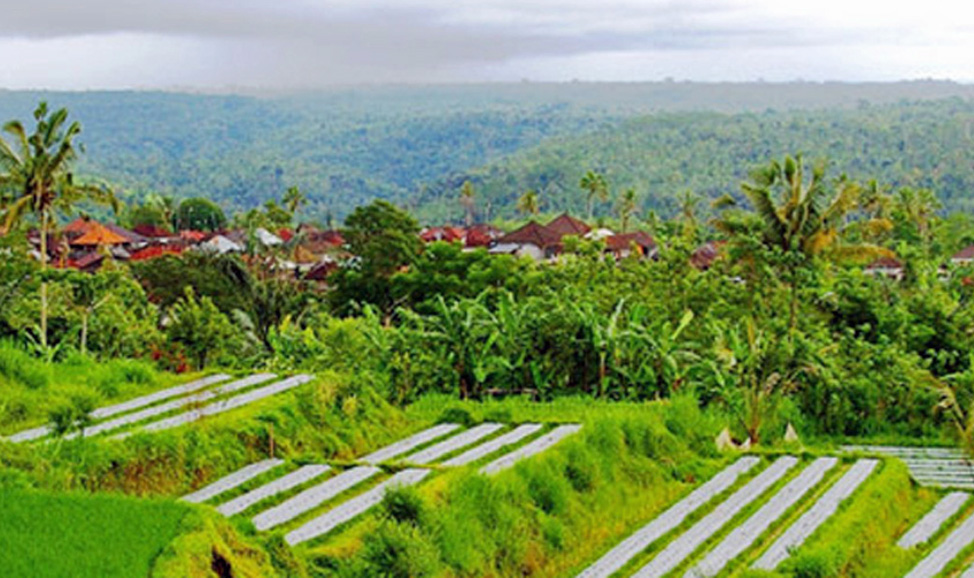 things to do in Bali , Pelaga on Bali tour to Beduga
