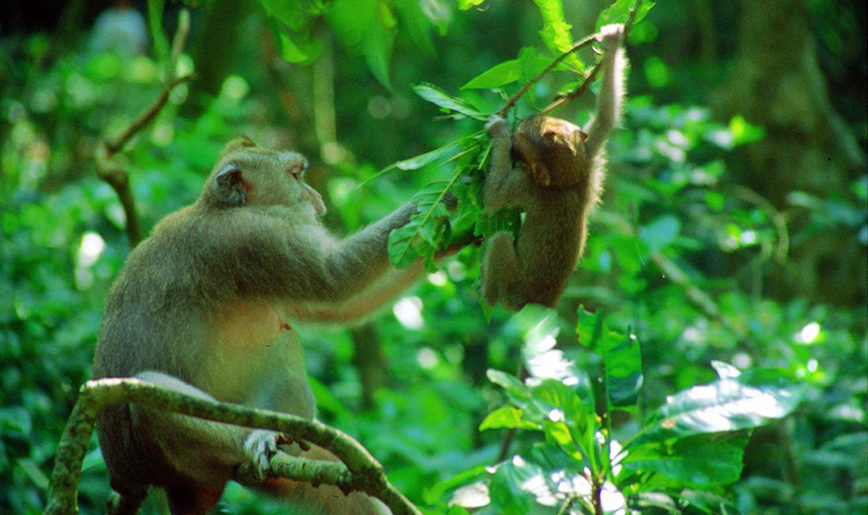 things to do in Bali - Sacred Monkey Forest near Ubud, North Bali