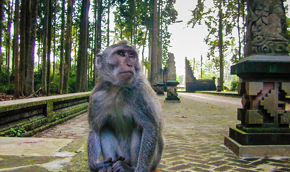 things to do in Bali, Sangeh Monkey Forest