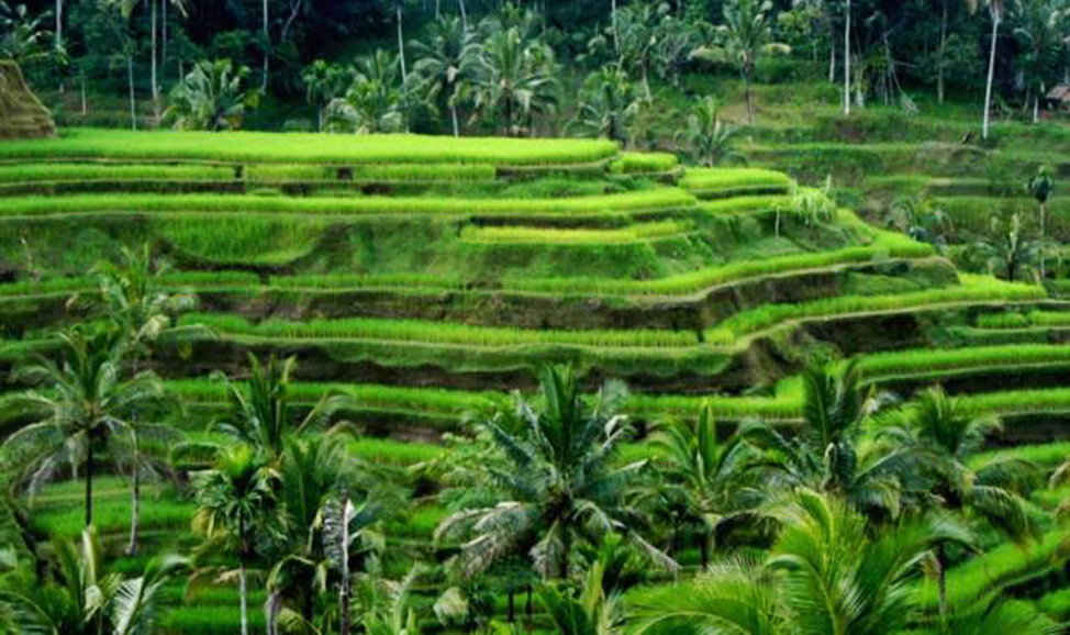 things to do in Bali - Tanah Wuuk north Bali, north Bali