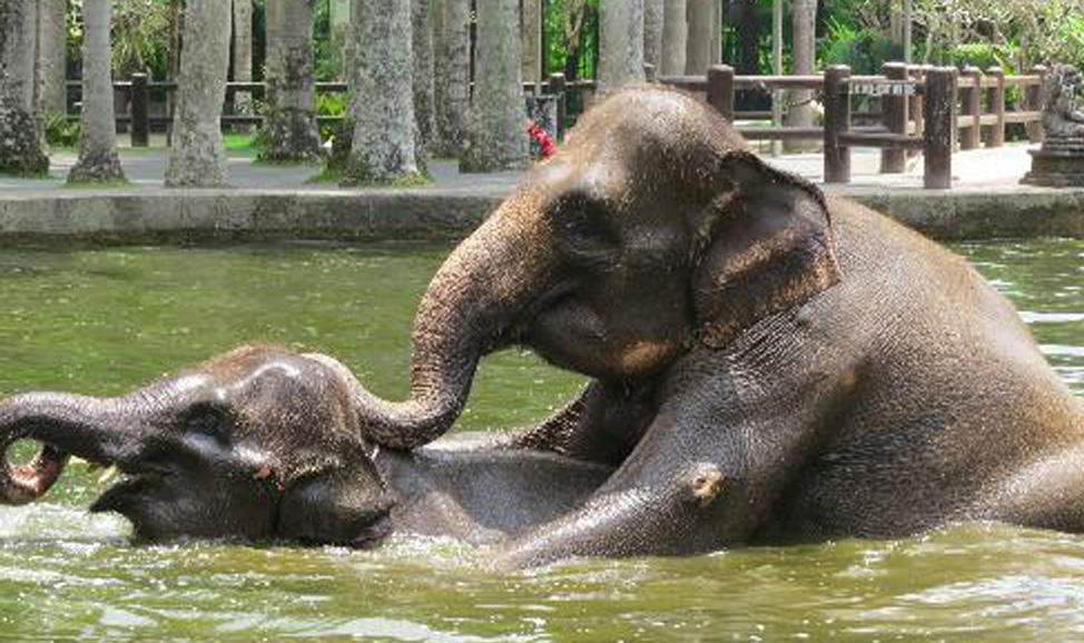 things to do in Bali - Taro Elephant Safari Park, near Ubud, for a magical interactive experience with elephants.