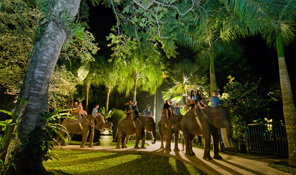 things to do in Bali - Taro Elephant night safari