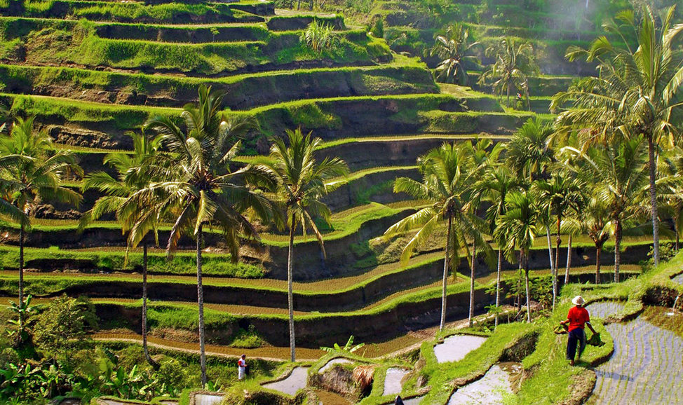 things to do in Bali - Tegalalang rice terraces