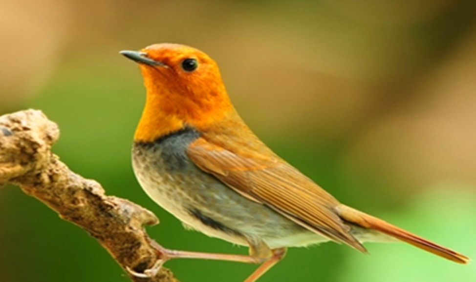 things to do in Bali - Ubud Bird Walk