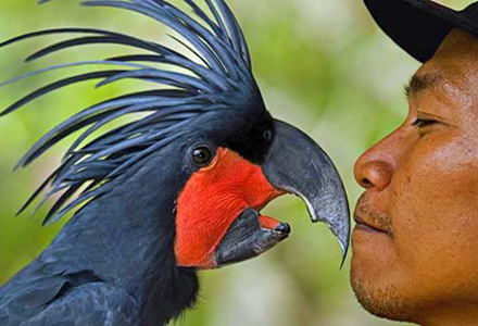 Bali Bird Park A must for bird lovers